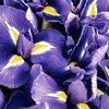 Ralph Lauren Polo Blue Eau De Parfum (75 ml)